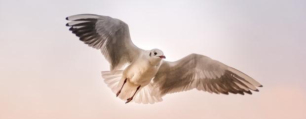 seagull-3465550_960_720
